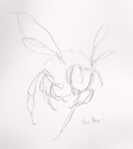 "A sketch by Zelde Grimm for ""Sania and the Bee""."